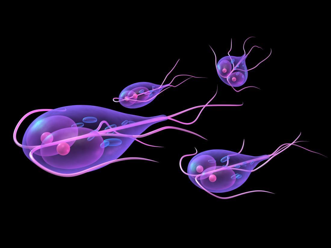 Az emberi test tisztítása a parazitáktól receptek
