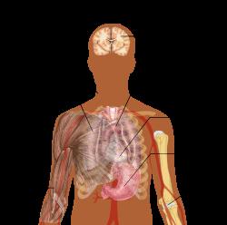 asztmás férgek kezelése a hely nemi szemölcsöktől fáj