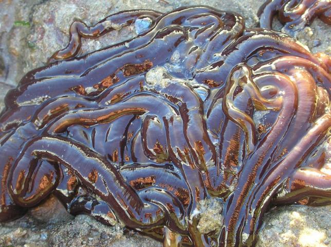 tengeri gyurusfereg giardia treatment natural remedies