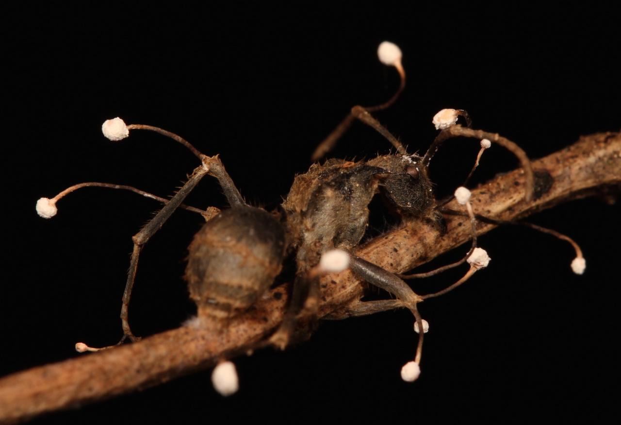 ahol a szervek a legtobb parazita kettőspont tisztít test méregtelenítő