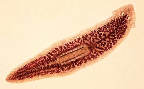 Giardiasis egy gyermekben