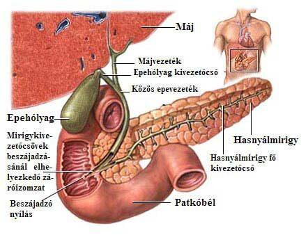 kerekférges férgek felnőttek kezelésében giardia infectie mens