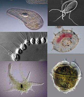 tabletták az epehólyagban élő paraziták számára felnőtt férgek tünetei és kezelési áttekintése