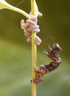 parazita viselkedés a férgek megelõzése széles spektrumú fellépéssel