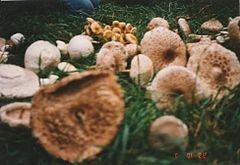 paraziták gombák példák bél paraziták std