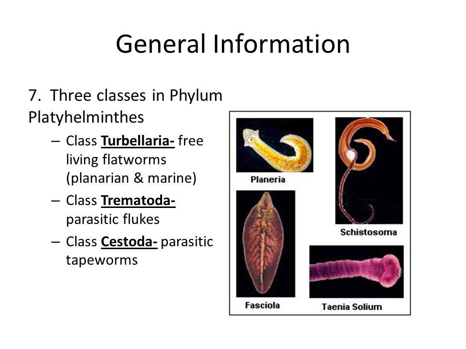 platyhelminthes clase cestoda giardia treatment adults